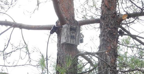 """Biri """"Ormanı"""" gözetliyor"""