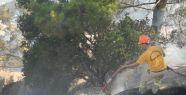 5 dönüm kızılçam ormanı zarar gördü