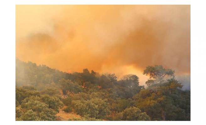 Muğla'da 1 günde 100 hektar orman yandı