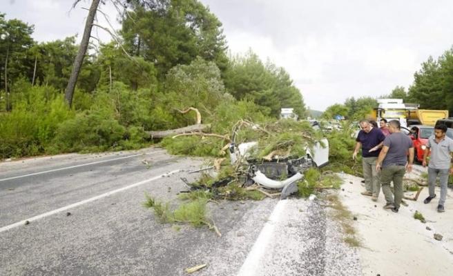 Polislerin içinde bulunduğu otomobilin üzerine çam ağacı devrildi