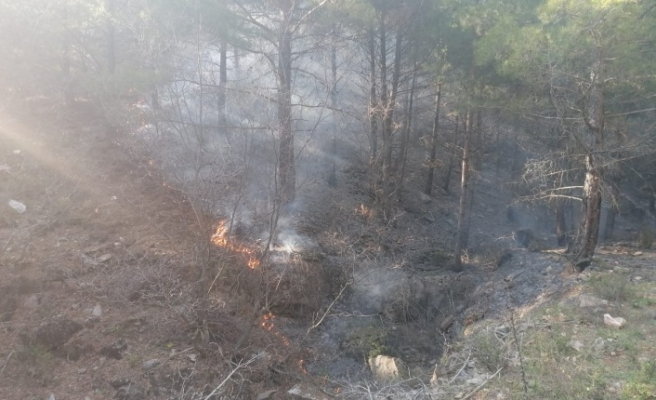Sezonun ilk orman yangını Esenköy'de çıktı