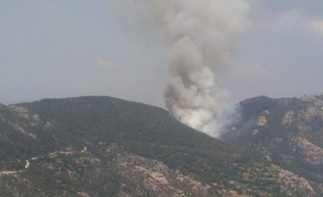 Milas'ta 4,5 hektar orman kül oldu