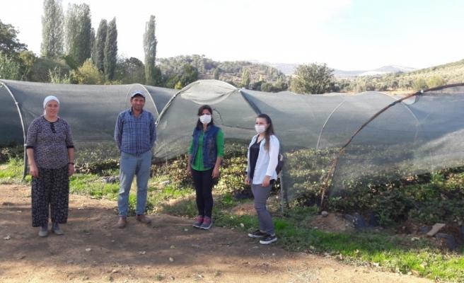 Biber, çilek üreticilerini ziyaret etti