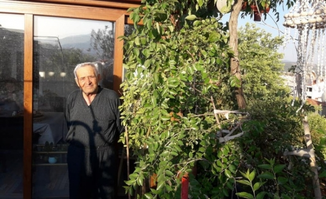 17 yılda çatısını tropik bahçeye çevirdi