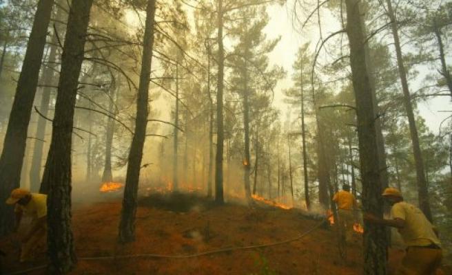 Orman Yangınlarında En Kritik 15 Gün
