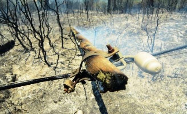 Kavaklıdere'de Orman Yangını