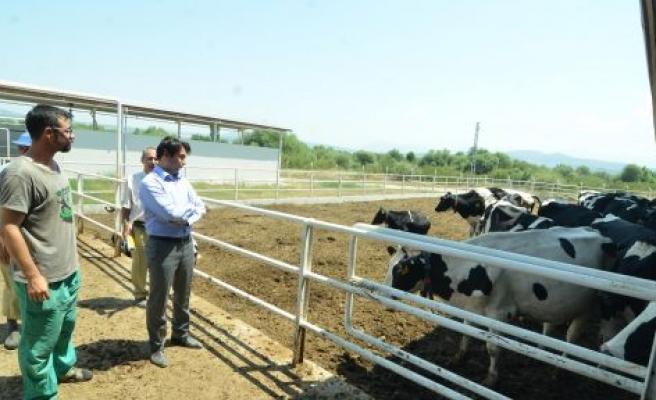 Kaymakam Tarımsal Gelişmeleri Yerinde İnceledi