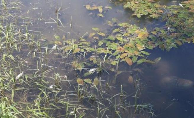 Yine Yatağan, yine toplu balık ölümleri