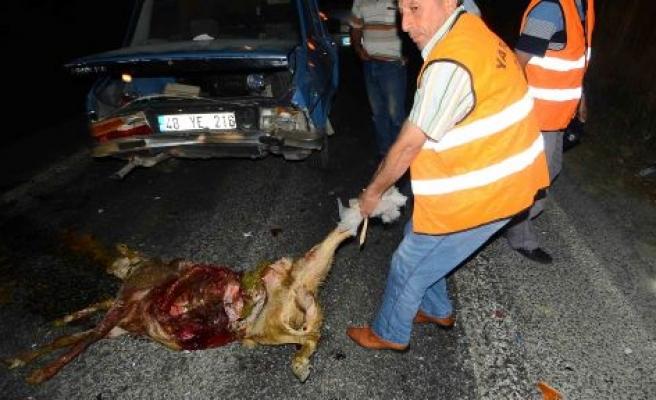 Zincirleme kaza, 3 koyun telef oldu