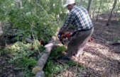Kestiği ağacın altında kalarak öldü