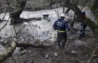 Adacıkta mahsur kalan köpekleri itfaiye kurtardı
