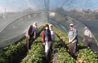 Dünya Kadın Çiftçiler Günü'nde kadın üreticilere...