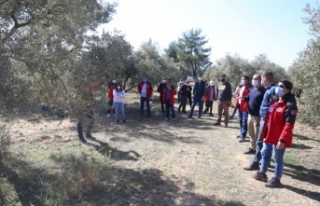 Yatağan'da zeytincilik eğitimi düzenlendi