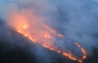 Menteşe ve Kavaklıdere'de 29 hektar kül oldu