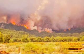 Muğla'daki yangınlarda son durum!