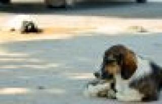 Yatağan'da Köpekten Vefa Örneği