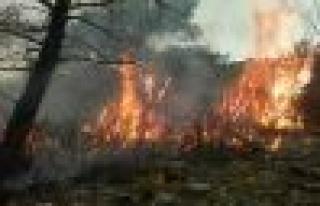 Yumaklı'da Orman Yangını
