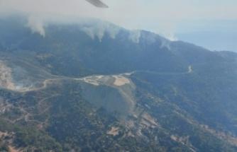 20 hektarın kül eden yangında, 1 kişi tutuklandı
