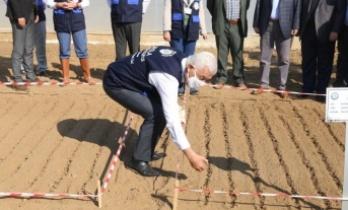 Ata tohumu 'Karakılçık' buğdayı toprakla buluştu