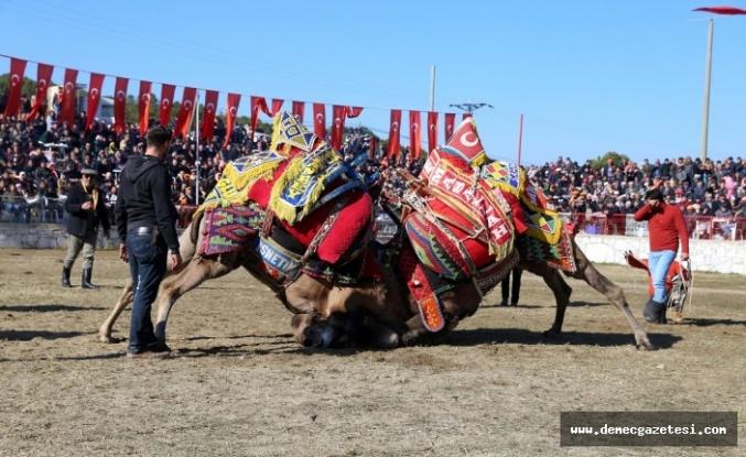 Yatağan arena doldu taştı: 190 devenin güreşini 15 bin kişi izledi