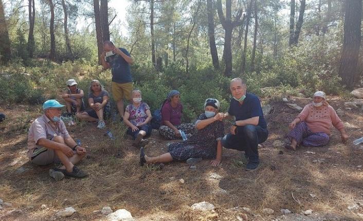 Milas-Akbelen ormanları sabah erken saatlerde kesilmeye başlandı